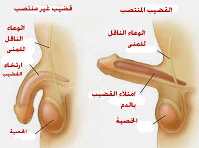 ادوية علاج سرعة القذف وضعف الانتصاب