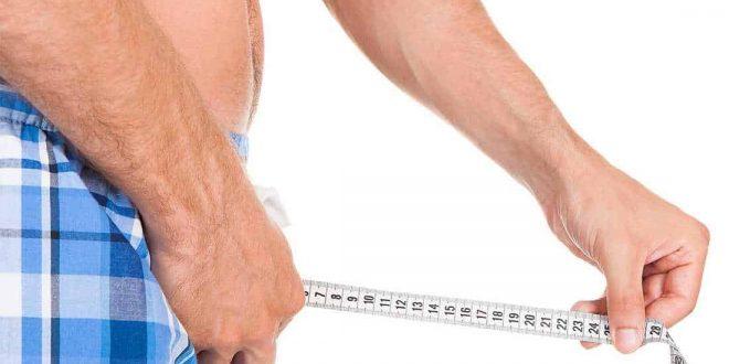 الطول الطبيعي للعضو الذكري بالصور