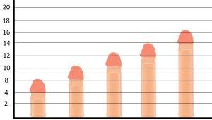 متوسط طول القضيب