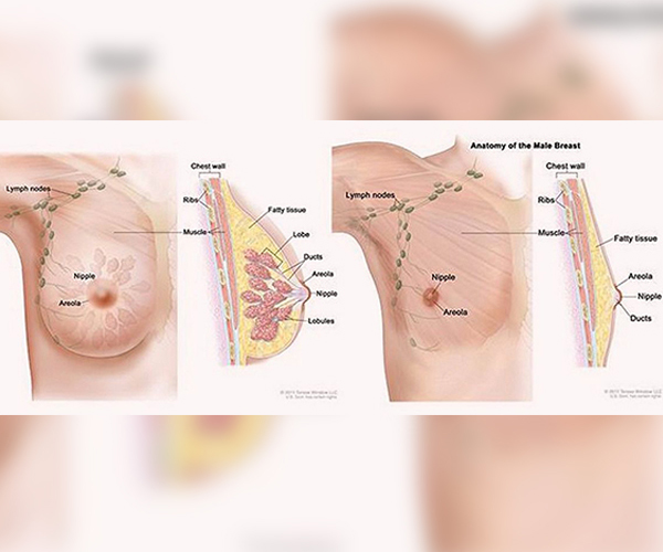 Breast enhancement with fat tissue